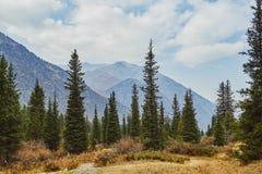 Floresta na frente das cordilheiras fotografia de stock