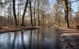 Floresta na Holanda de Clingendael Haia fotografia de stock royalty free
