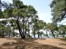 Floresta na ilha Imagens de Stock Royalty Free