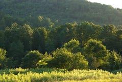 Floresta na luz do fim da tarde fotografia de stock