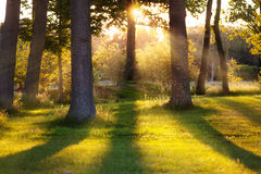 Floresta na luz traseira Fotografia de Stock