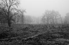 Floresta na manhã Fotos de Stock