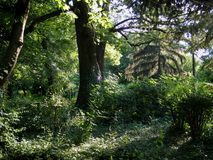 Floresta na manhã 2 Fotografia de Stock Royalty Free