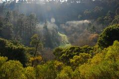 Floresta na manhã Fotografia de Stock