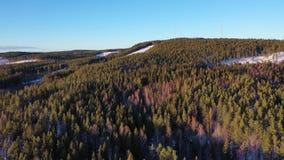 Floresta na metragem do zangão do inverno vídeos de arquivo