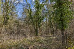Floresta na mola imagens de stock royalty free
