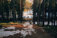 Floresta na mola Fotografia de Stock Royalty Free