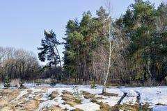 Floresta na mola adiantada com neve derretida em um dia ensolarado brilhante Paisagem, fundo fotografia de stock royalty free