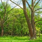 Floresta na mola com árvores verdes e dia brilhante Fotos de Stock
