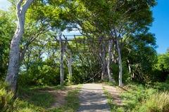 Floresta na montanha Imagens de Stock Royalty Free