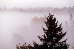 Floresta na névoa Fotografia de Stock Royalty Free