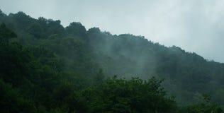 Floresta na névoa foto de stock royalty free