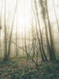Floresta na névoa Fotografia de Stock