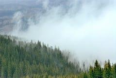 Floresta na névoa e na neve Imagens de Stock