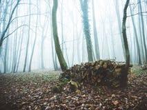 Floresta na névoa podada com recentemente Imagens de Stock
