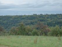 Floresta na Floresta Negra com as nuvens no fundo Imagens de Stock Royalty Free