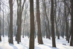 Floresta na neve imagem de stock
