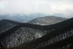 Floresta na neve Foto de Stock