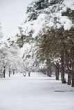 Floresta na neve, trajeto nevado do pinho do inverno fotos de stock