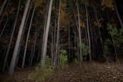 Floresta na noite Imagens de Stock Royalty Free