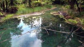 Floresta na paisagem do rio e do lago em Nova Zelândia vídeos de arquivo