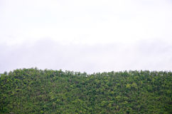 A floresta na parte dianteira das montanhas na névoa e o baixo encontro nublam-se; Represa Kanchanaburi Tailândia de Srinakarin Imagens de Stock