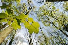 Floresta na primavera Imagens de Stock