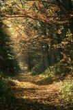 Floresta na queda. imagem de stock