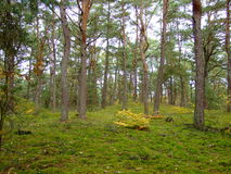 Floresta na queda 28 Fotos de Stock