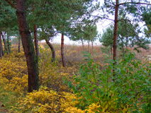 Floresta na queda 32 Fotografia de Stock Royalty Free