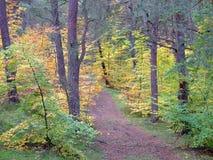 Floresta na queda Foto de Stock