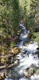 Floresta nacional fotografia de stock royalty free