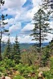 Floresta nacional de Apache-Sitgreaves, o Arizona, Estados Unidos Imagens de Stock