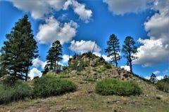 Floresta nacional de Apache-Sitgreaves, o Arizona, Estados Unidos foto de stock