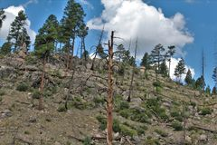 Floresta nacional de Apache-Sitgreaves, o Arizona, Estados Unidos imagens de stock royalty free
