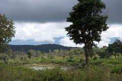 Floresta nacional de Bandipur Imagens de Stock Royalty Free