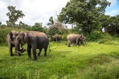 Floresta nacional de Bandipur Fotografia de Stock Royalty Free