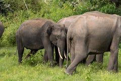 Floresta nacional de Bandipur Foto de Stock Royalty Free