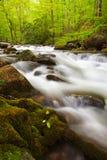 Floresta nacional de Chattahoochee fotografia de stock