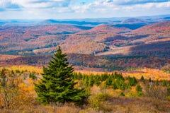A floresta nacional de Monongahela de um botão Spruce negligencia fotos de stock royalty free