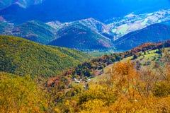 A floresta nacional de Monongahela de um botão Spruce negligencia fotos de stock
