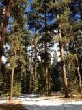 Floresta nacional de Ochoco Fotos de Stock Royalty Free