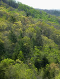 Floresta nacional de Pisgah Imagem de Stock Royalty Free
