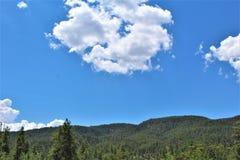 Floresta nacional de Tonto, o Arizona U S Ministério da Agricultura, Estados Unidos Imagens de Stock