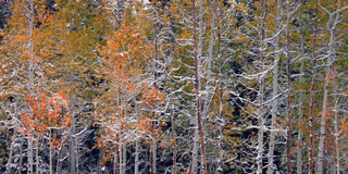 Floresta nacional do esconderijo - Utá fotografia de stock royalty free