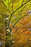 Floresta nas cores bonitas do outono em um dia ensolarado Imagens de Stock