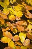Floresta nas cores bonitas do outono em um dia ensolarado Fotografia de Stock
