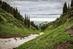 Floresta nas montanhas Fotografia de Stock Royalty Free