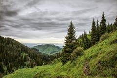 Floresta nas montanhas Foto de Stock Royalty Free