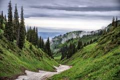 Floresta nas montanhas Fotografia de Stock
